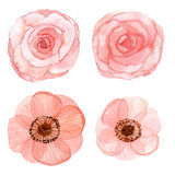 Set of flowers watercolor drawing Royalty Free Stock Images