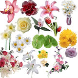 Set flowers on a white background Royalty Free Stock Photography