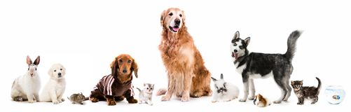 Set of fluffy pets. Set of cute fluffy home pets stock image