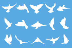 Set of flying doves on blue background Stock Images