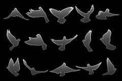 Set of flying gray doves on black background Stock Photo