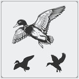 Set of flying wild ducks. Royalty Free Stock Photo