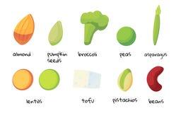 Set of foods high in protein. Vegan protein is a resource. Set of foods high in protein. Beans, broccoli, asparagus, tofu, peas, lentils, almonds, pistachios stock illustration
