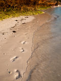 Set of footprints  in the sand. Set of footprints in the sand on a background of the karst mountains Stock Photos