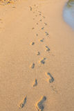 Set of Footprints in the Sand on Hawaii Beach. Two sets of footprints from a father and his daughter on a sandy beach in Oahu Hawaii Stock Photography
