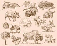 Set of forest. Vector original hand drawn illustration Stock Images