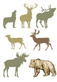 Set of forest animals. Illustrated set of forest animals including bear, wolf, moose, reindeer, caribou and stag deer, white background Royalty Free Stock Photos