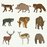 Set of forest animals. Bear, bison, wild boar, fox. Wolf llama lynx moose royalty free illustration
