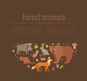 Set of forest animals Stock Photos