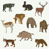 Set of forest animals. Vector illustration Royalty Free Stock Image