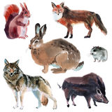 Set of forest animals. Watercolor illustration in white background. Royalty Free Stock Images