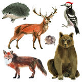 Set of forest animals. Watercolor illustration in white background. Royalty Free Stock Photos
