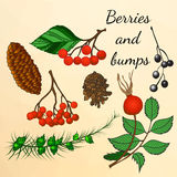 Set of forest berries and bumps in autumn style Stock Photos