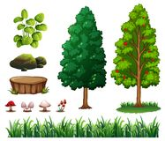 A set of forest element Stock Image
