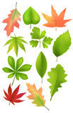 A  set of forest leaves Stock Image