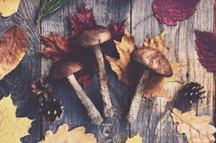 Set of forest mushrooms and colorful autumn leaves on wooden boards Royalty Free Stock Photos