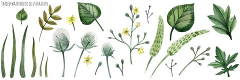 Set of Forest Plants. Traced vector, Set of Forest Plants stock illustration