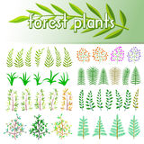 Set forest plants. Design elements Royalty Free Stock Photography