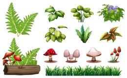 Set of forest plants. Illustration vector illustration
