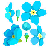 Set of forget-me-alpine a wild flower. vector illustration Stock Photos