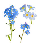 Set of forget-me-not blue flowers isolated on white Stock Image