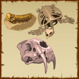 Set of fossil skeletons, three different animals Stock Photos