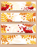 Set of four  autumn banners (468x120px). Set of four  banners (468x120px) with autumn rowan leaves and berries Royalty Free Stock Photography