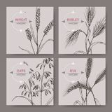 Set of four banenrs with bread wheat, rye, barley and oats sketch. Cereal plants collection. Great for bakery, agriculture, farming design Stock Photography