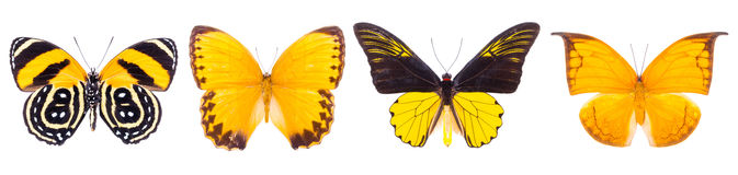 Set of four beautiful colorful butterflies Royalty Free Stock Image