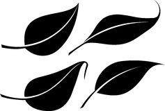Set of four black leaves vector silhouettes.  Stock Photo