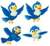 Set of four blue birds Stock Images