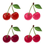 Set of four bunches of cherries. Royalty Free Stock Photography