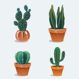 Set of four cactus in flower pot. Stock Photos