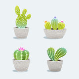 Set of four cactus in flower pot. Royalty Free Stock Photo