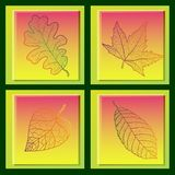 Set of four cards with colored autumn leaves. Royalty Free Stock Images