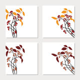 Set of four cards with red chokeberry branches Royalty Free Stock Photo