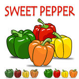 Set of four color sweet pepper Royalty Free Stock Images