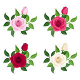 Set of four colored roses. Stock Photos