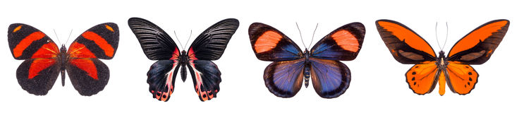 Set of four colorful and beautiful butterflies Stock Photos