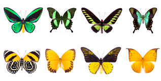 Set of four colorful and beautiful butterflies Royalty Free Stock Image