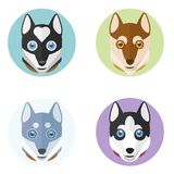 Cute dog heads in flat style. Vector hand drawn illustration. Set of four cute husky heads in round frames isolated on white background Stock Photo