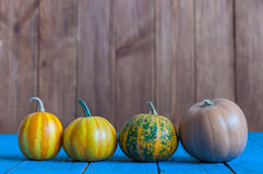 Set of four different pumpkins. Pumpkin - one Of Royalty Free Stock Images