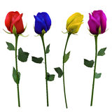 Set of four differently colored roses Stock Images