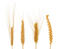 Set of four ears of wheat Stock Photo