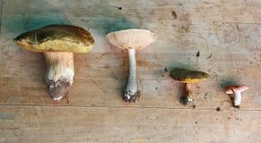 Set of four edible mushrooms (white, boletus, suillus, russula) Stock Photos
