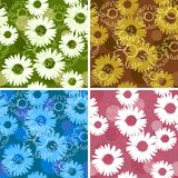 Set of four floral seamless patterns with daisies. /camomiles Royalty Free Stock Image