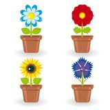 Set of four flowers in flowerpots Stock Image