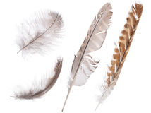 Set of four forest birds feathers isolated on white Stock Photo