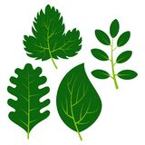 Set of four green leaves on white background. Vector illustration Stock Images