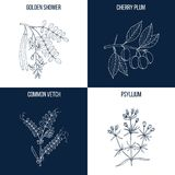 Set of four hand drawn eatable and medicinal plants Stock Photo